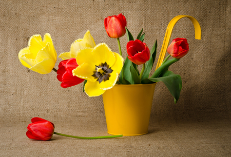 Colorful tulips in yellow pot on burlap Imagens