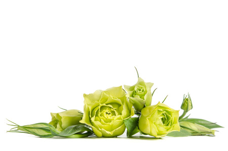 bouquet  of  green roses lying on white background Stock Photo