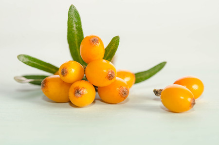 Sea buckthorn with green leaf on blue background  Archivio Fotografico