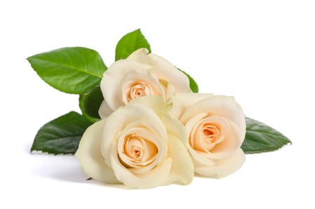 Beauty bouquet from white roses lies isolated on white background