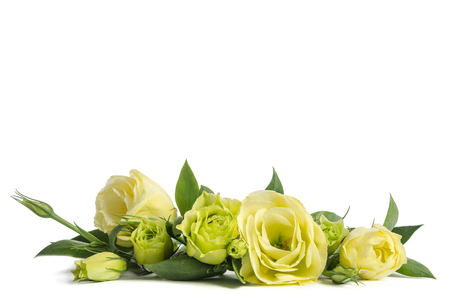 bouquet of green roses lying on white background