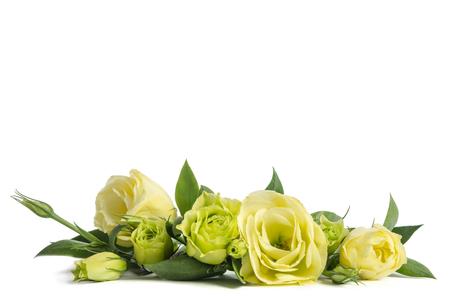 ramo de rosas verdes sobre fondo blanco