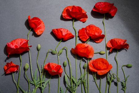 red poppies on grey background