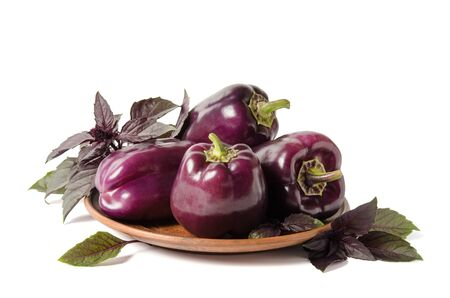 Fresh vegetable. Dark purple peppers in the plate with leaves of basil  isolated on white backgound