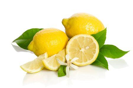 Fiore dell'albero di limoni e limoni isolati su fondo bianco