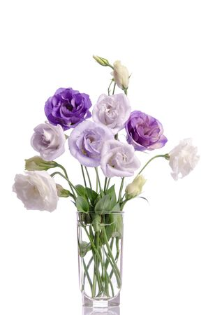 bunch of violet, white and violet eustoma flowers in glass vase isolated on white Reklamní fotografie
