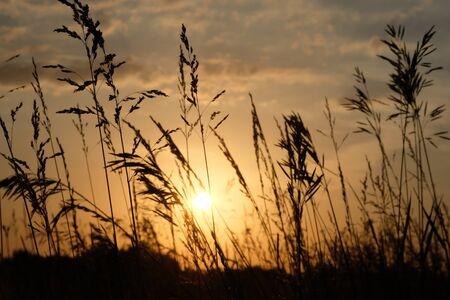 Dawn in a wheat field. Beautiful landscape on sunrise Stok Fotoğraf - 147581603