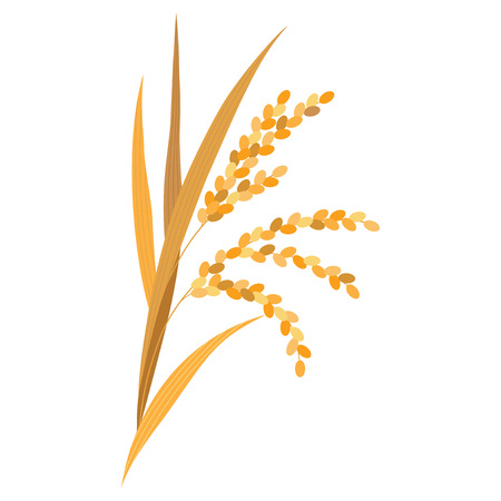 Rice plant isolated on white background Vector Illustration