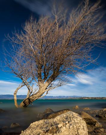 nice tree in lake long exposure