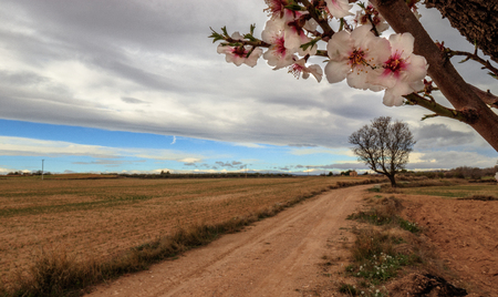 The way to the almonds