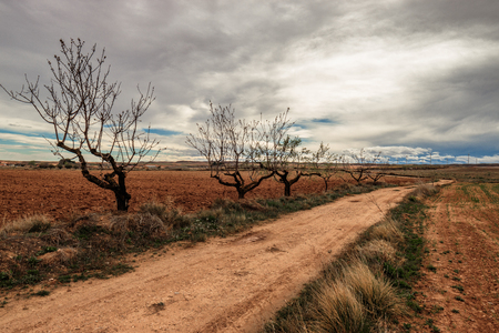 the way with the almond trees cloudy day