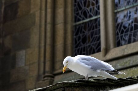 seagull on the outside of an church with glass in the background Stock fotó