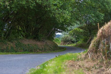 road in the middle of nature surrounded by vegetation