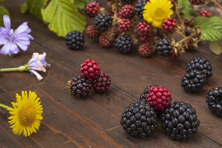 black and red berries with yellow and purple flowers