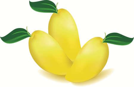 mango fruta: Vectorial de un mango y la hoja de Vectores