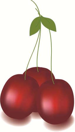 Illustration of cherry fruit