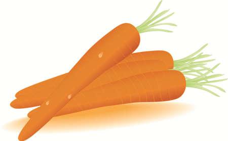 vector three carrot Illustration