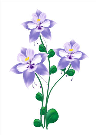 stamens: Blue columbine flower Illustration