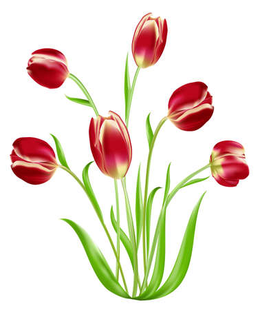 detail of bunch: Tulip isolated on white background