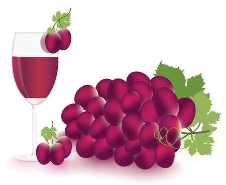 Grapes and vine Vector Stock Vector - 13443097