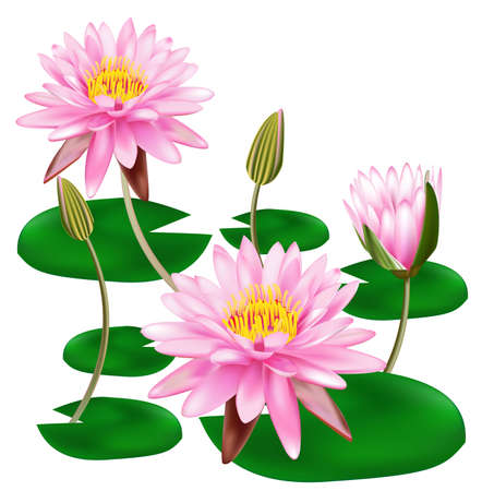 Beautiful Lotus Stock Vector - 13443094