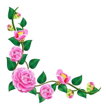 Vine beautiful camellia