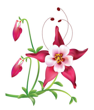 Red columbine Flower Stock Vector - 13548251