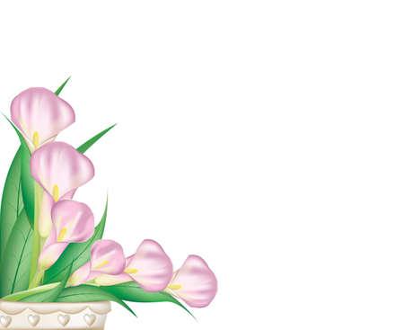Beautiful pink calla lilies Stock Vector - 13624314