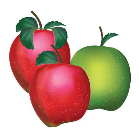 apple isolated Illustration
