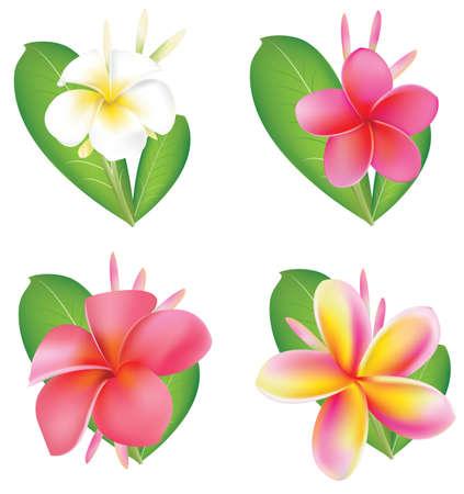 Set Of four flower Fragipani Illustration