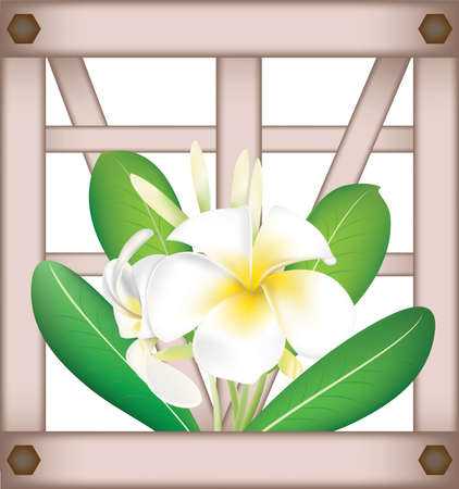 Fragipani on window