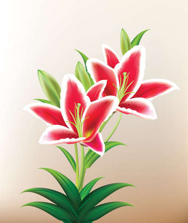 white lilly: Beautiful Red Lilly