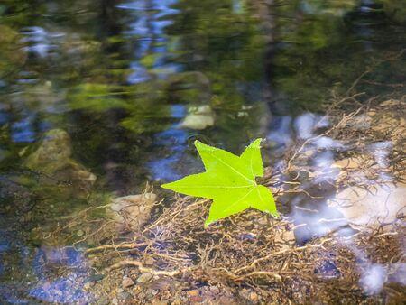 leaf water: Leaf floating on water. 1