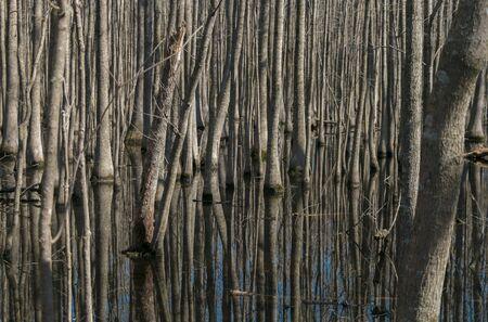 Deep in the swampy woods. (1)