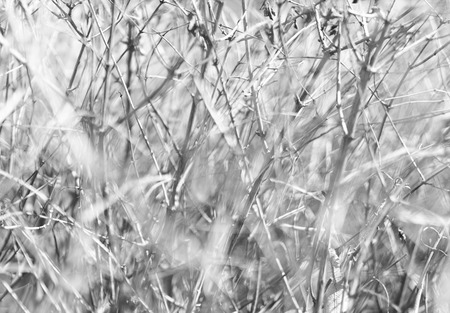 offsprings: Horizontal bright black and white dramatic branches bokeh background backdrop