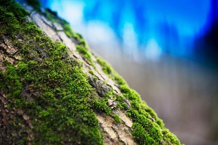 diagonal: Diagonal moss on tree trunk bokeh background