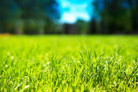 horizontal  green: Horizontal green grass bokeh background Stock Photo