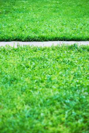 park path: Vertical park path with green grass background Stock Photo
