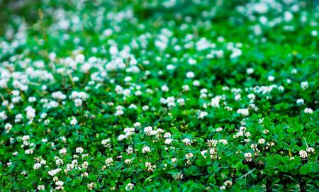 horizontal  green: Horizontal green summer flowers bokeh background Stock Photo
