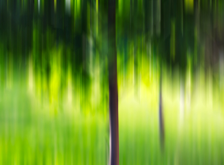 crone: Summer tree in motion blur background