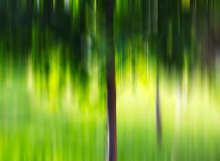 crone: Summer tree in motion blur background