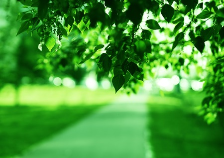 Horizontal Green Leaves Landscape With Road Background Stock Photo