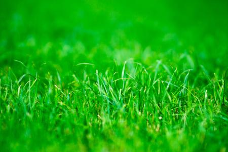 centered: Horizontal vivid green centered grass bokeh background