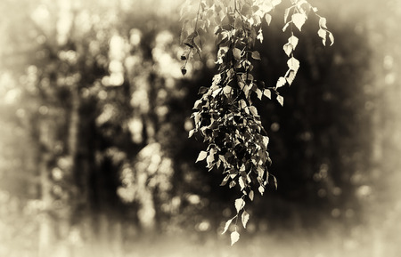 aligned: Horizontal right aligned sepia tree branch bokeh background