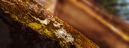 Horizontal vivid warm light moss on bunker landscape perspective bokeh backdround backdrop