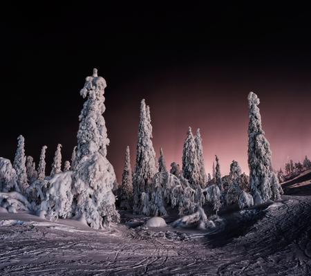 winter finland: Horizontal vivid winter Finland landscape background backdrop