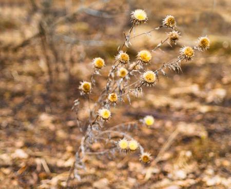 Horizontal vivid yellow autum plant bokeh background backdrop Stock Photo
