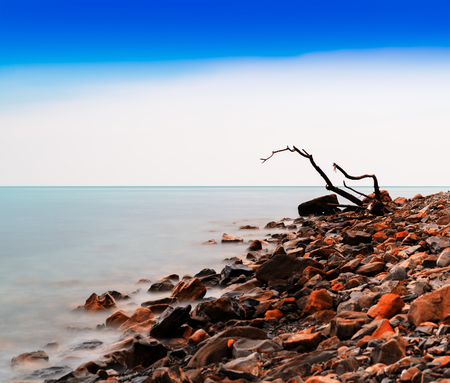 Horizontal vivid tree snag on rocky beach bokeh background backdrop