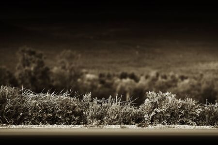 grass border: Sepia mountain road with grass border background hd