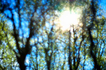 Trees bokeh in direct sunlight glow backdrop hd Stock Photo